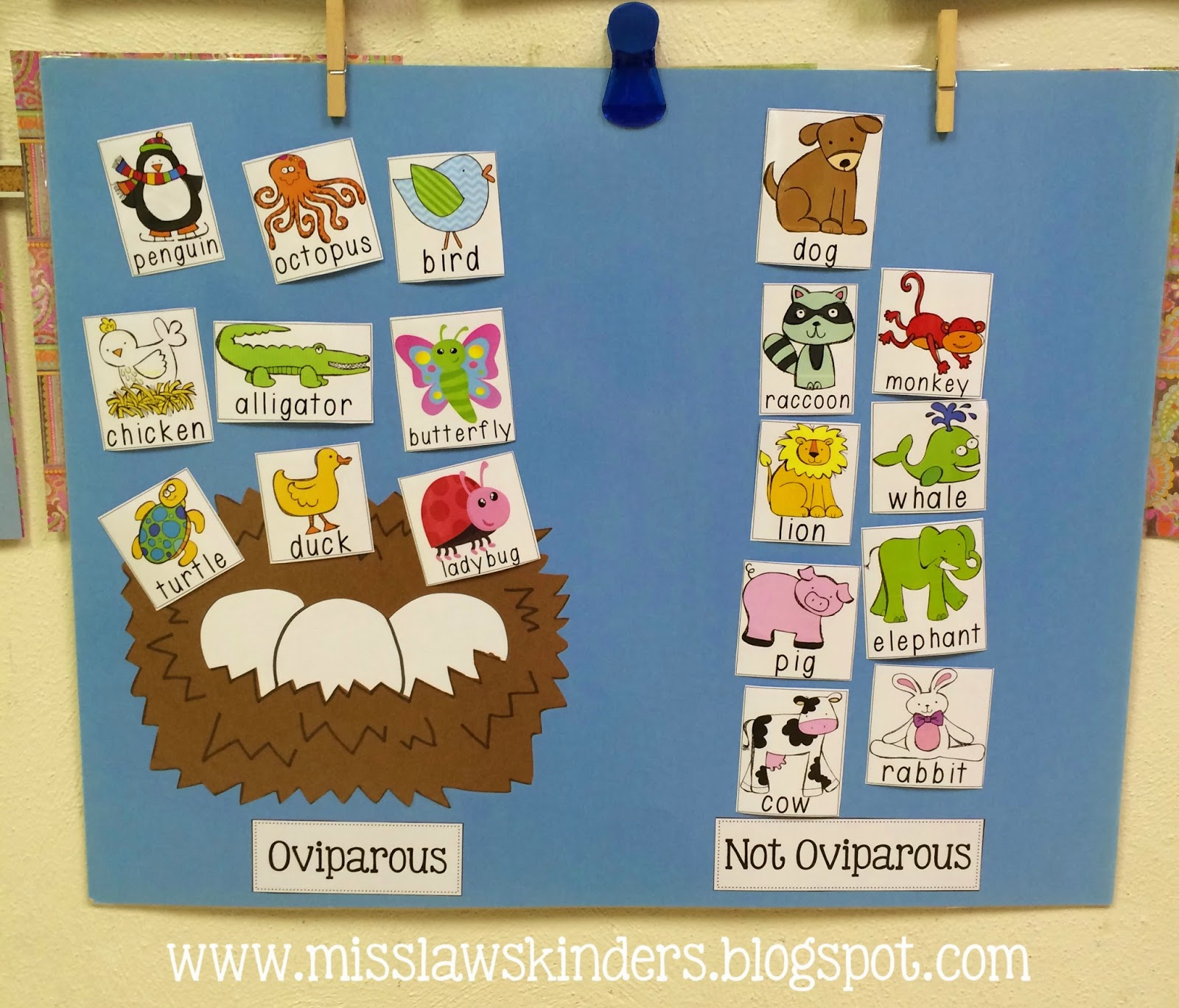 Miss Law S Kinders Oviparous Animal Life Cycles Day 2 All About Oviparous Animals