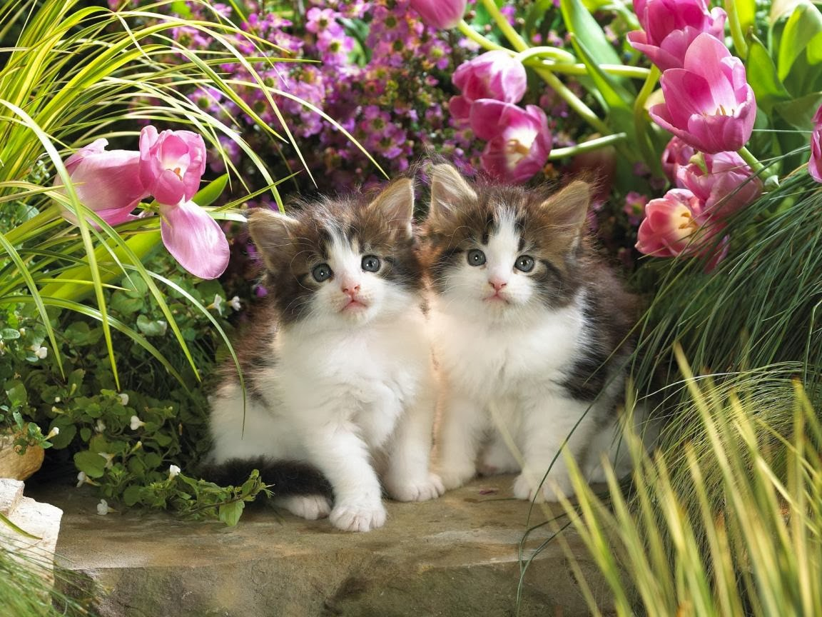 Beautiful Cats Wallpapers Hd Google Hd Images