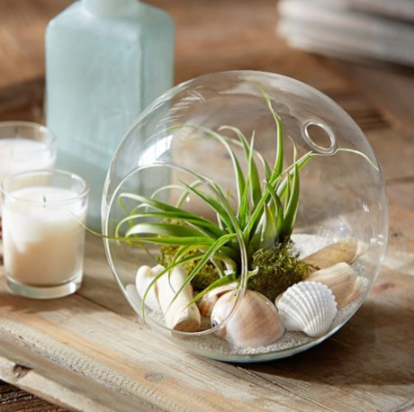 Tabletop Glass Globe Beach Garden with Air Plant