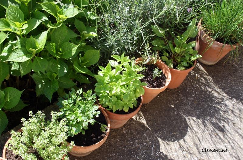 le blog de clementine mon jardin d 39 herbes aromatiques. Black Bedroom Furniture Sets. Home Design Ideas