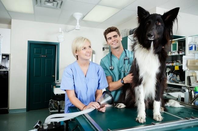 Problemy związane z gruczołami okołoodbytowymi u psów