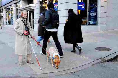 dog on the side walk