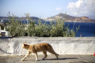 エーゲ海サントリーニ島写真