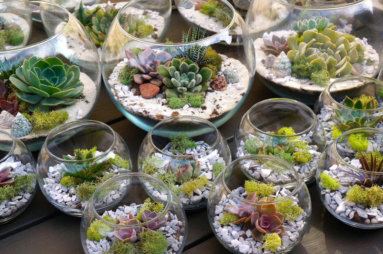 10 mini jardines en peceras de vidrio ForPeceras De Jardin