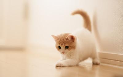 قطط مضحكة