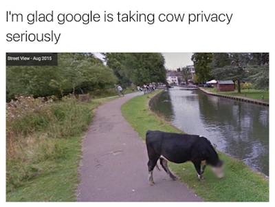 google blurred face of a cow