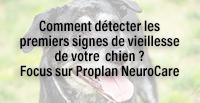 Comment détecter les premiers signes de vieillesse de votre chien ? Focus sur Proplan NeuroCare