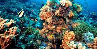 Especies prioritarias arrecifes