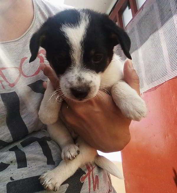 cachorro de tamaño pequeño 2