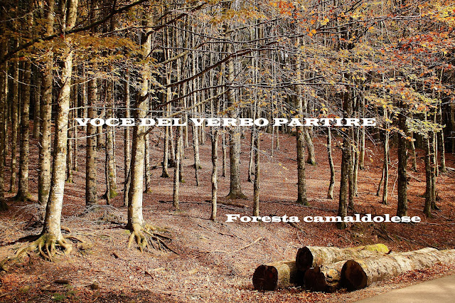 FOLIAGE NELLE FORESTE CASENTINESI