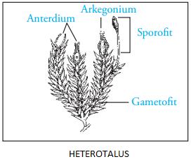 heterotalus