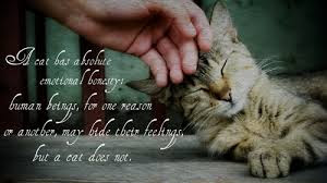 quotes a cat best absolute.