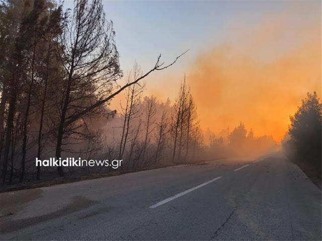 Πυρκαγιά καίει ανεξέλεγκτη στη Σιθωνία Χαλκιδικής (βίντεο)