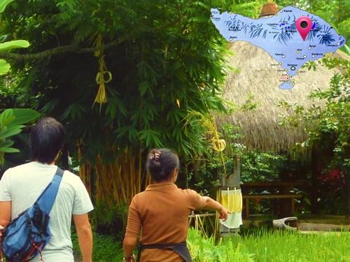 恒例のコーヒー豆農園訪問