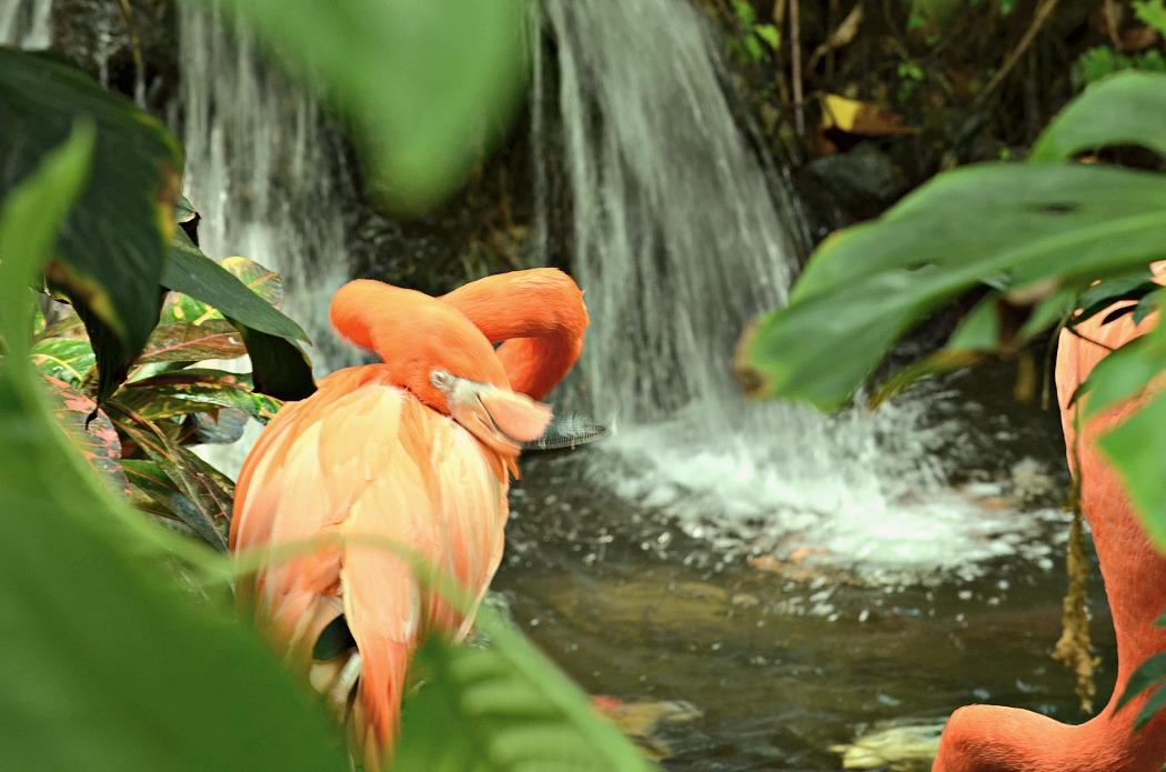 Butchart Gardens Victoria Island British Columbia Flamingos