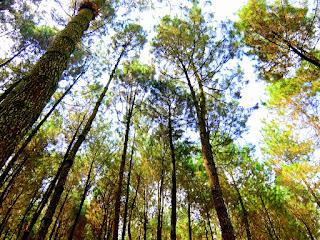 Selfie Melayang Pinusan Kragilan