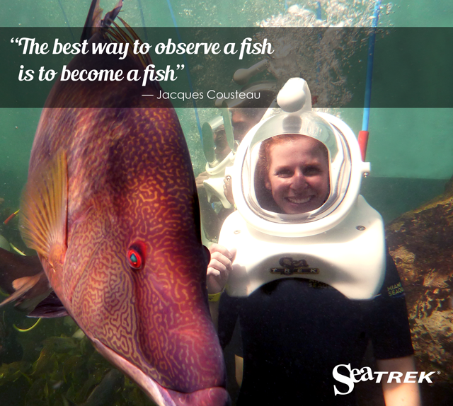 The best was to observe a fish is to become one -Jacques Cousteau