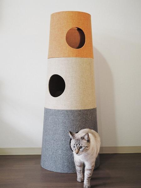 穴から出てきたシャムトラ猫