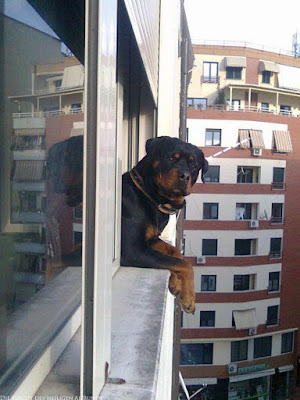 Witziger Hund schaut aus dem Fenster lustig