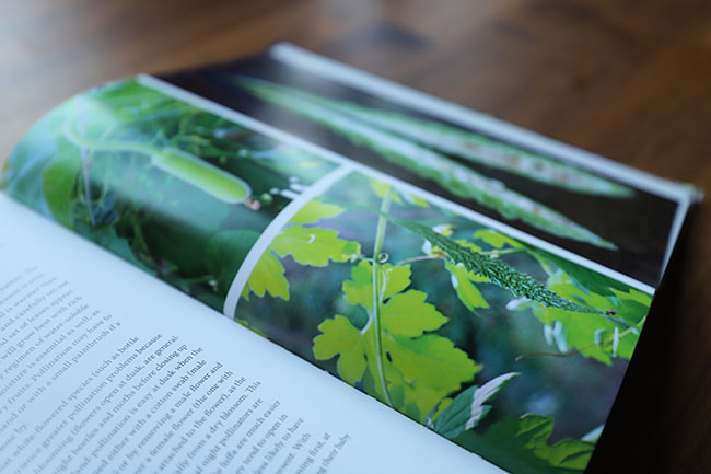 Sneak Peek -  My first gardening book is published - Pre-orders are welcome!