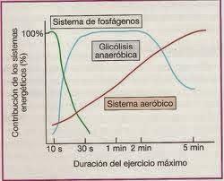 sistemas energeticos del cuerpo humano pdf