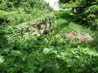 Тараканівський (Дубенський) форт. Зарості борщівнику на території застави
