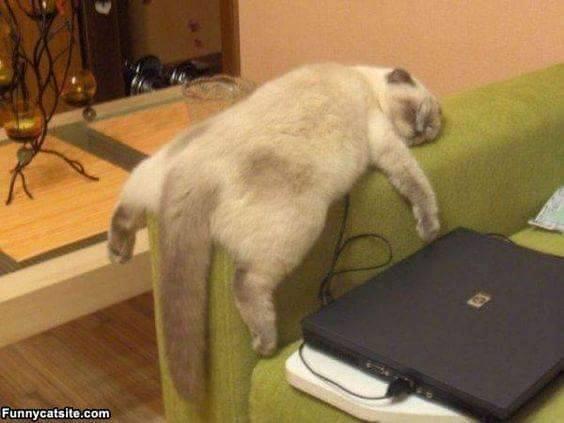 Kucing Tidur habis FBan