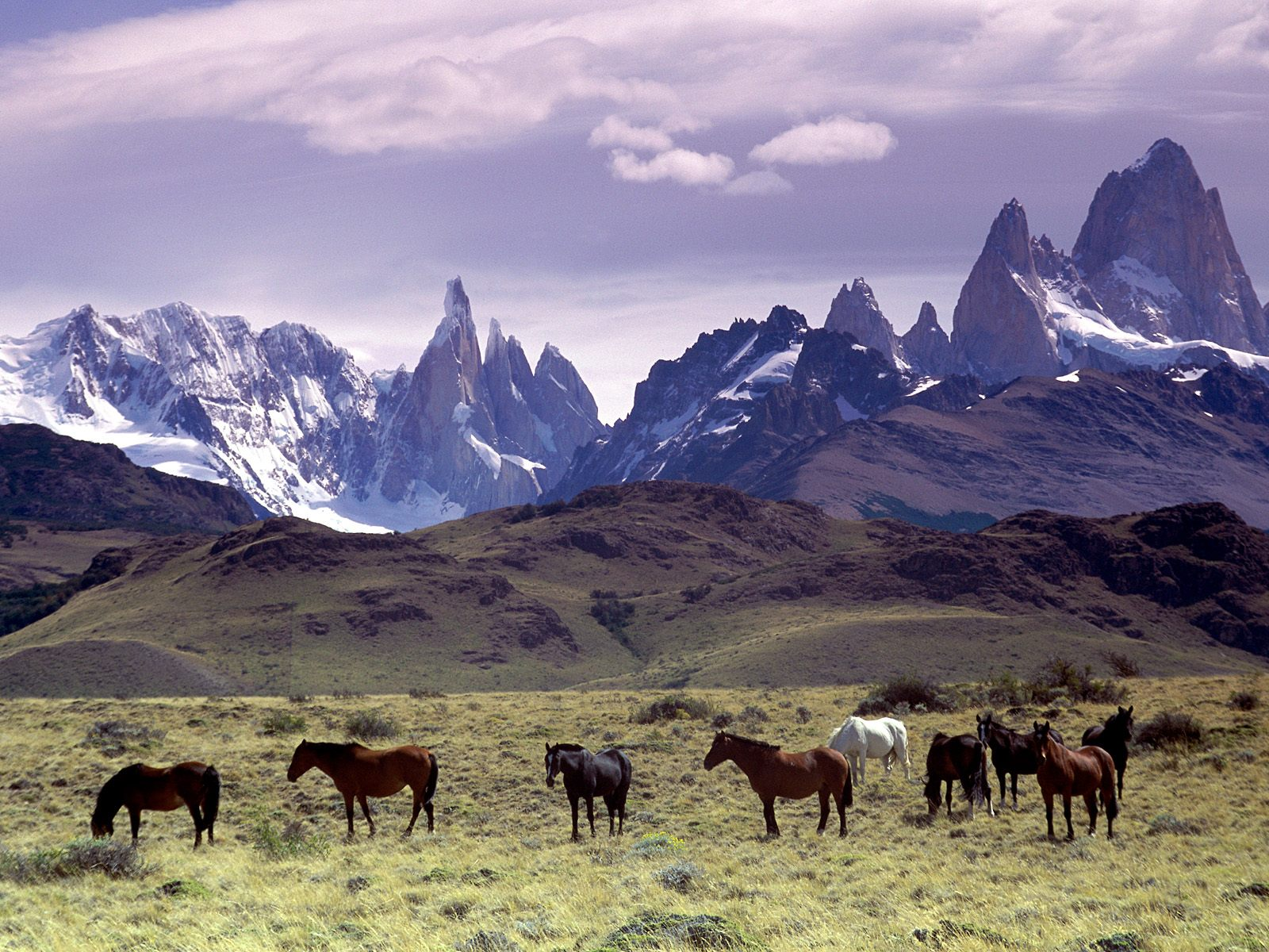 http://4.bp.blogspot.com/-c6Rz4rXgt1g/TVxK2y7LrrI/AAAAAAAACt4/LEqGgBz-mU4/s1600/the-wild-sprit-andes-mountains-argentina-group-of-horses-pictures-wallpapers.jpg