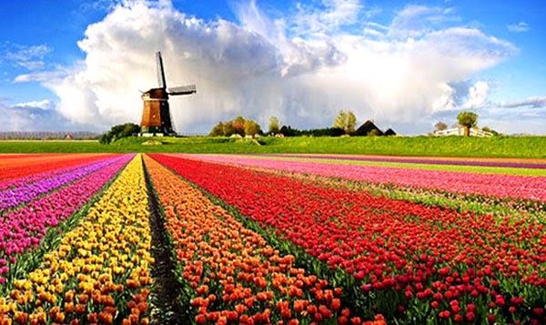 Foto dan Video Film Negeri Van Oranje