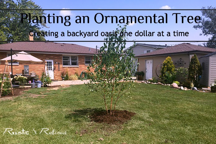 Ornamental Tree Planting