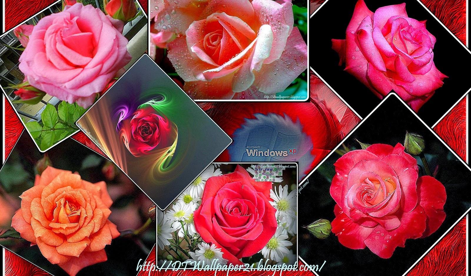 Desktop Wallpaper Background Screensavers Beautiful Flower