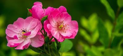 Flores y botanica