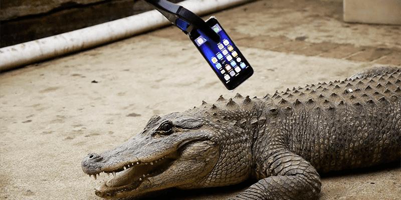 iphone 7 vs alligator