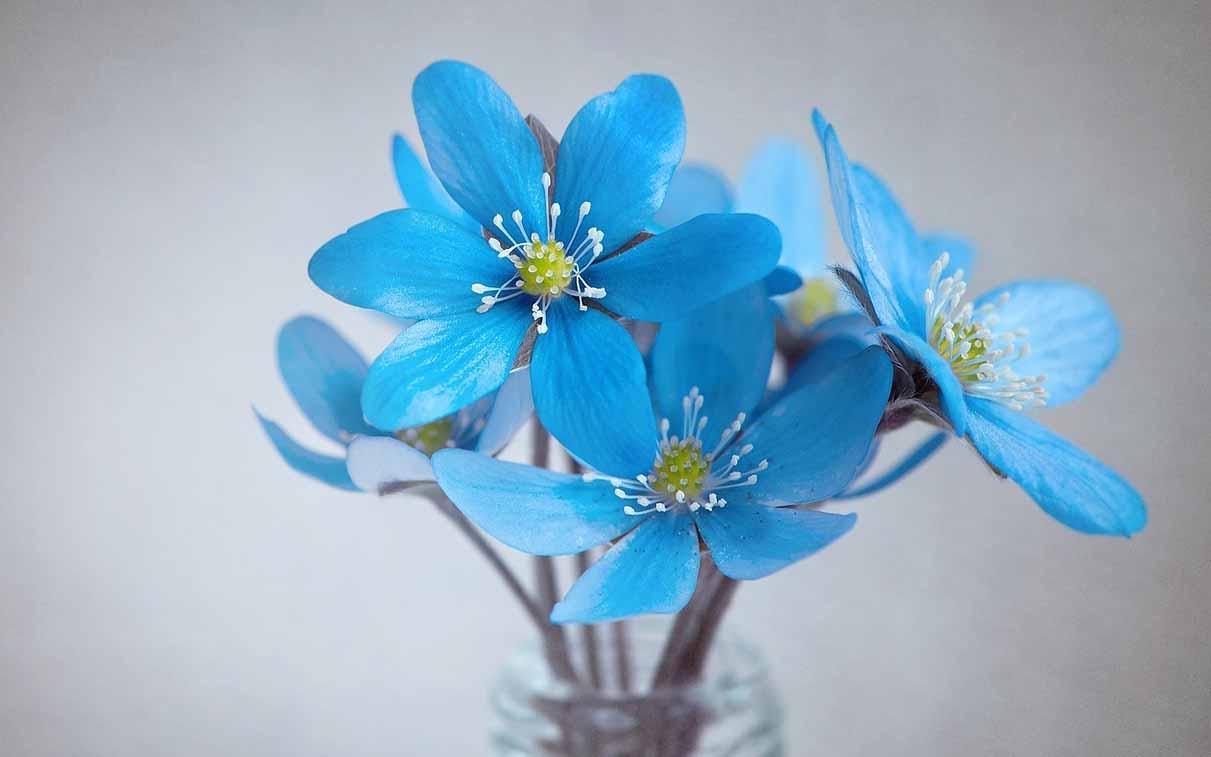 flower dp for whatsapp