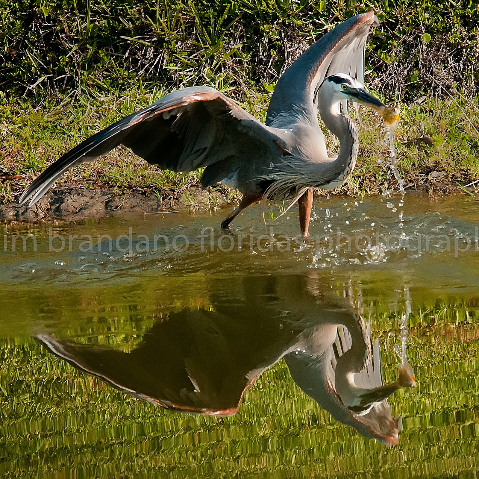 JP BRANDANO: FLORIDAS FINE ART PHOTOGRAPHERS: EVERY