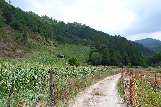 Viñedos al inicio del sendero - Asturias