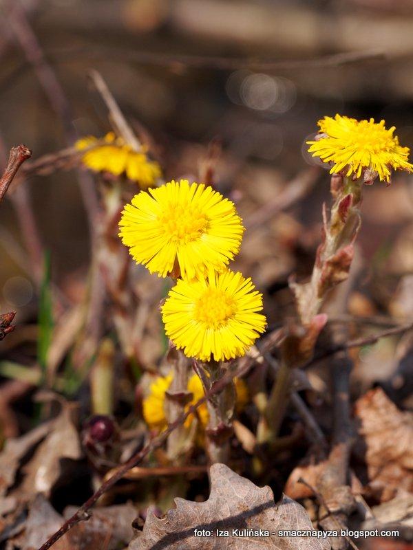 wiosenne kwiaty, kwiatki, wiosna, oznaki wiosny, wiosenna wycieczka