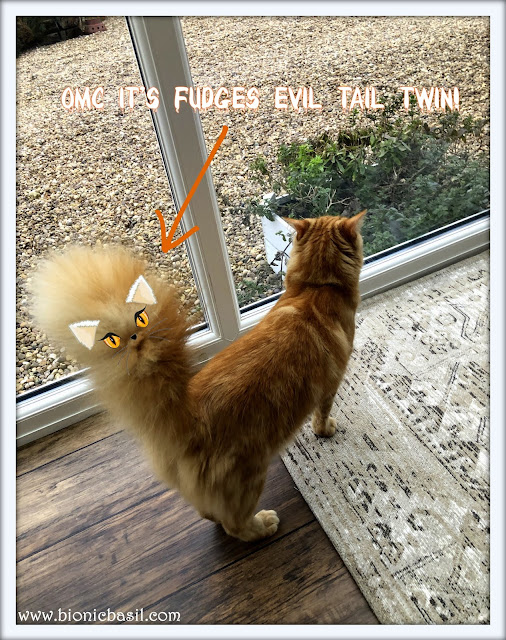 Fudge's Tail Twin @BionicBasil® The Sunday Selfies