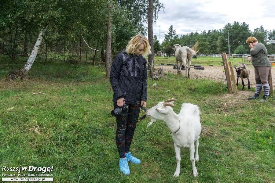 Kociewie na 4 kopyta - Ośrodek Patataj w Mirotkach