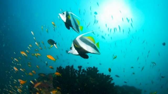 ท่องเที่ยว, แนวหินปะการัง, มัลดีฟส์, สถานที่ดำน้ำ, สถานดำน้ำทั่วโลก, อันดับสถานที่ดำน้ำ, เกาะบาซารูโต  อาร์ชิเปลาโก โมซัมบิก (Bazaruto Archipelago, Mozambique)
