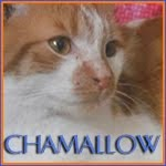 http://animaux76.blogspot.fr/2014/03/chamallow.html