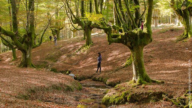 Hayedo de Otzarreta otoño destinos viaje españa euskadi