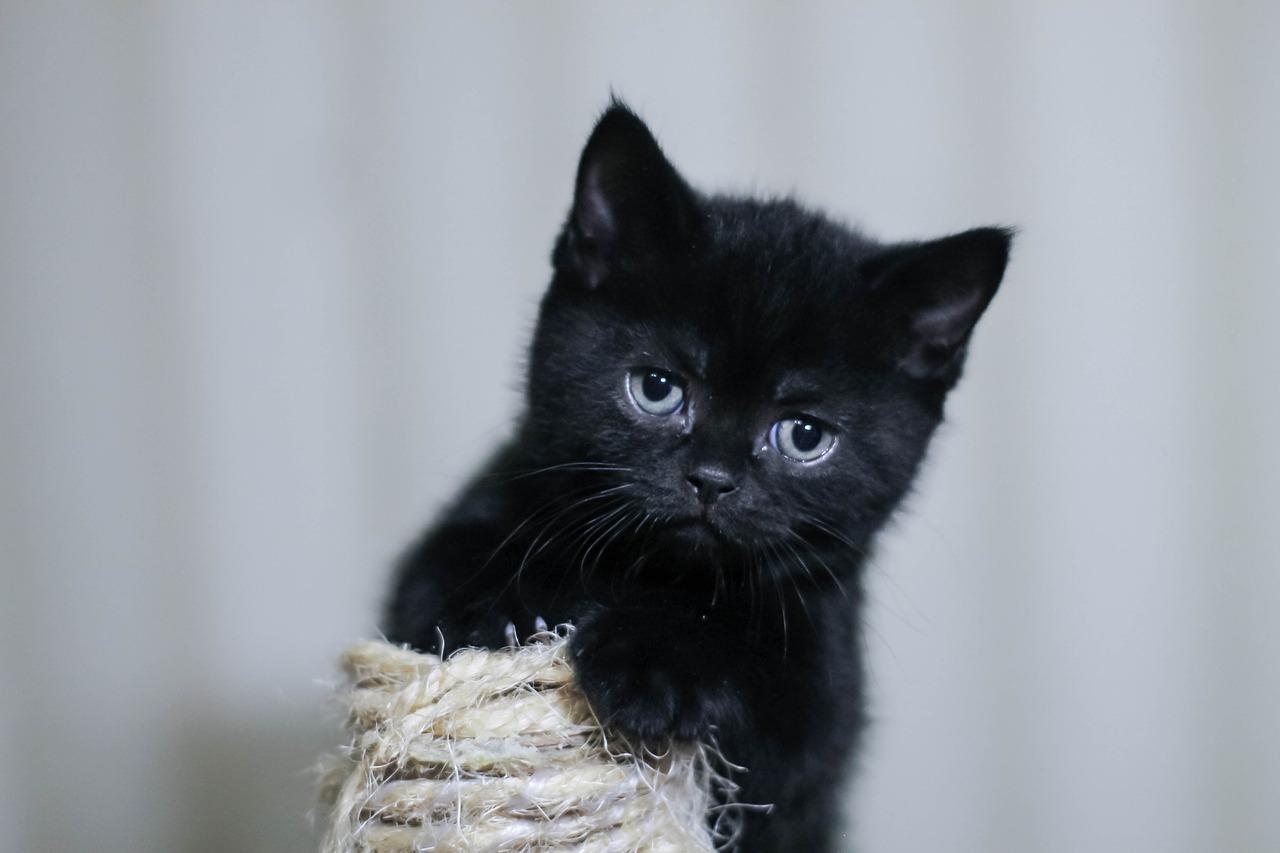 kucing comel dan manja
