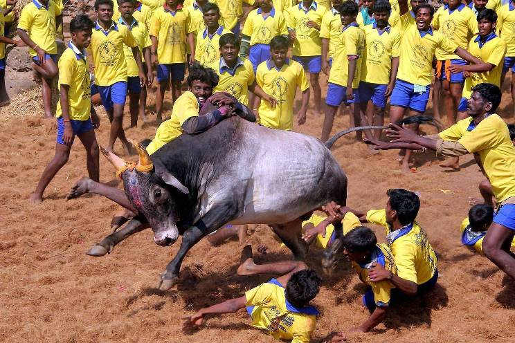 Ban on Jalikattu under Prevention of Cruelty to Animals Act, 1960 : SC