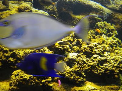 Aquarium - prin fauna Mediteranei (Creta 2010)