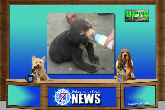BFTB NETWoof Dog News with bear cub on back screen