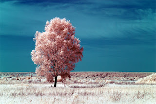 The Secrets Behind Infrared Photography