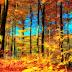 Papel de Parede Natureza Floresta Outono