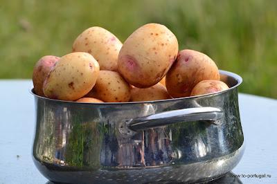 простые рецепты португальской кухни