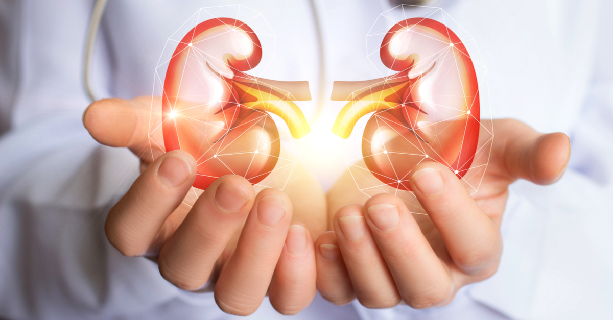 The Kidney Stops Working Interdependence Of Organs In The Body